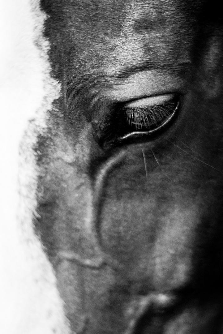 Le-regard-de-Qaporal_by_sylphire