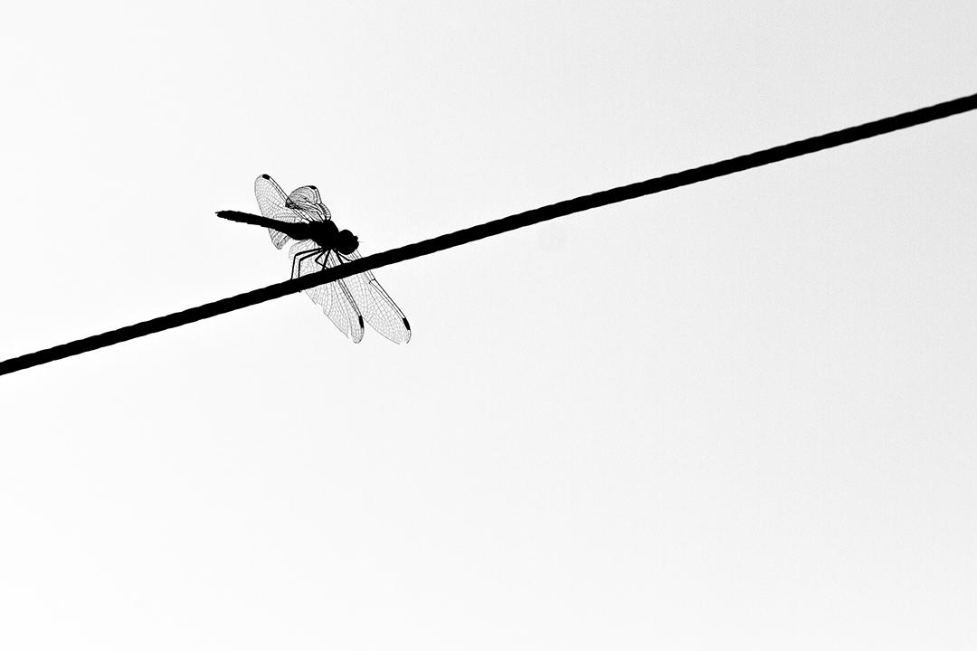 Lenvol_by_sylphire