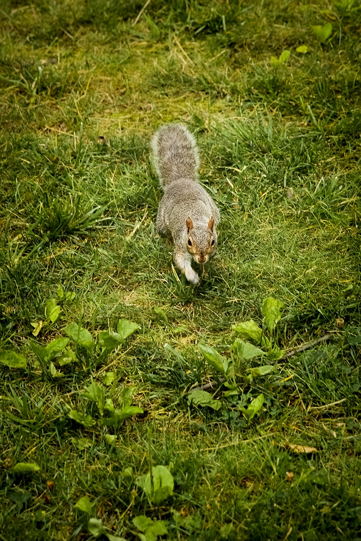 Running-squirrel_by_sylphire