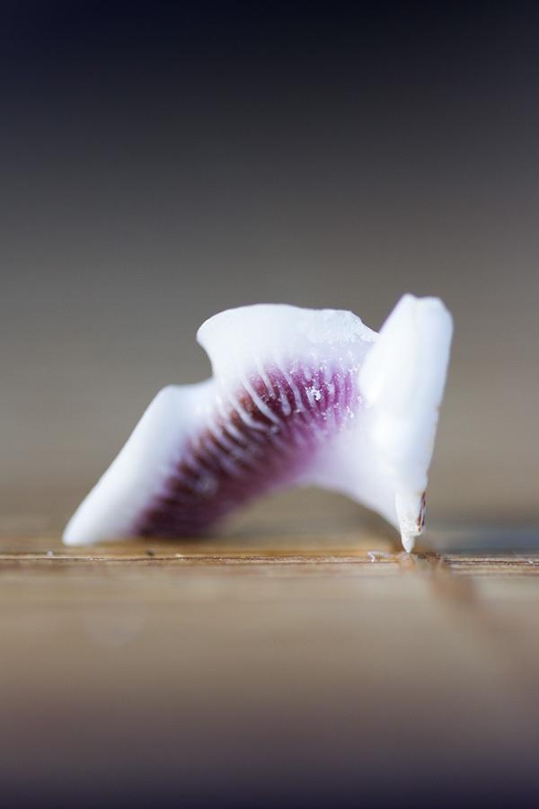 Sea-Shell_by_sylphire