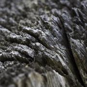 Wooden Rift