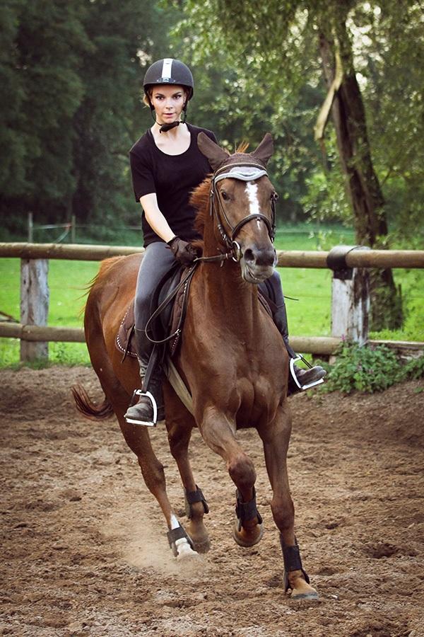 Horse Viper