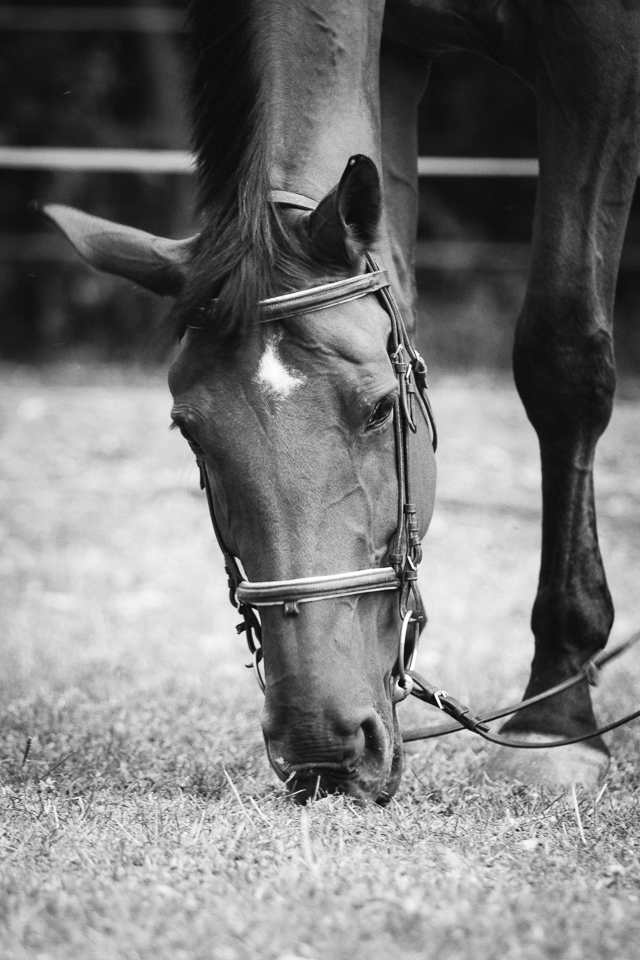 Séance Equestre - Amélie - 09