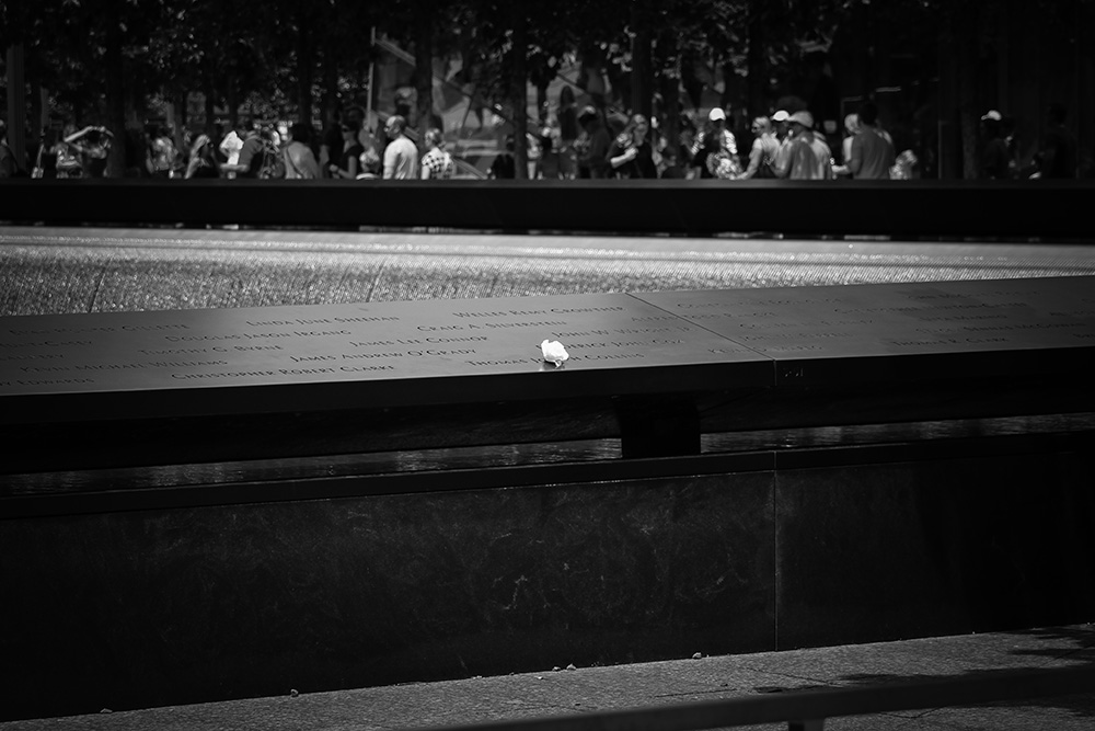 White Rose at World Trade Center Memorial