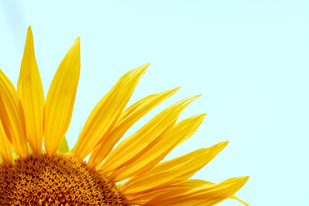 Soleil Naturel