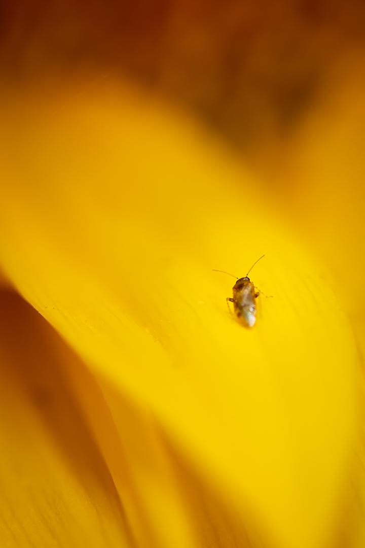 The Yellow Adventure